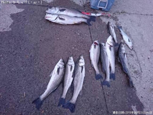 酒田 市 釣り 情報