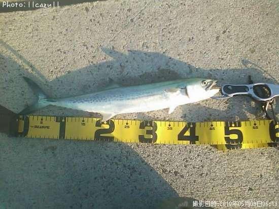石川 県 釣り 情報