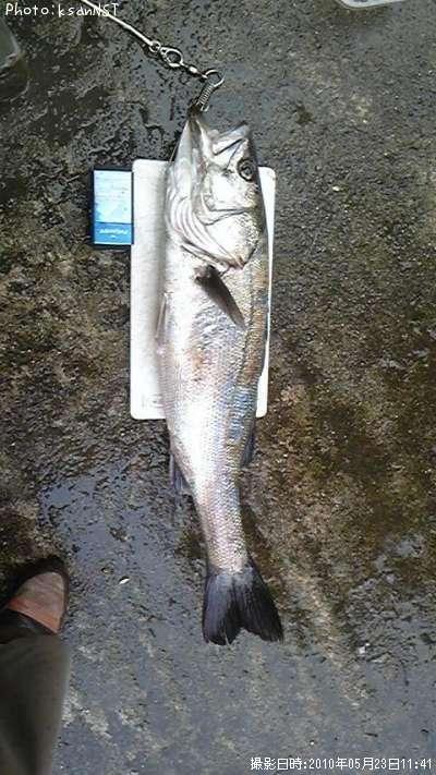 釣り 糸魚川